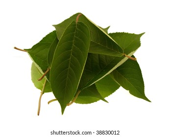 Some green beautiful leaves isolated on a white background