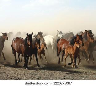 Some horses are beautiful, kayseri , turkey