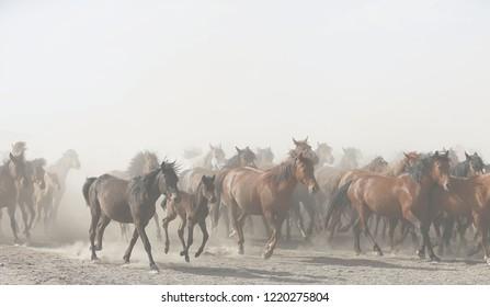 Some horses are beautiful, kayseri, turkey