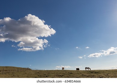 Some horses on top of a mountain, with big blue sky and white clouds