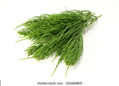 some horsetail stems on a light background