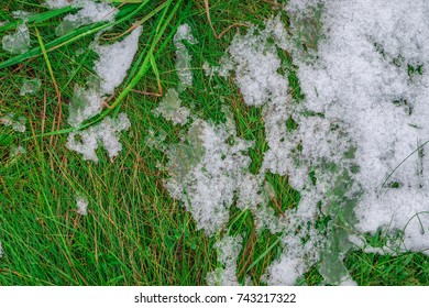 Some ice and snow on a juicy and fresh green spring grass.