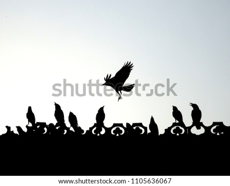 Some Indian crows sitting in a row , flying , playing , fighting enjoying freedom on the roof of a house black silhouette landscape, wallpaper copy space for paste text beautiful isolated