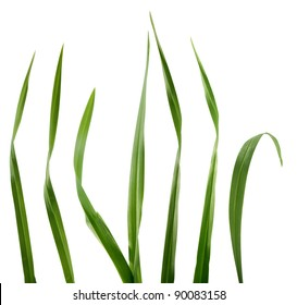 Some isolated green blades of the grass