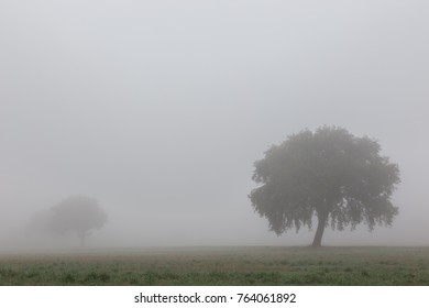 Some isolated trees in the midst of fog