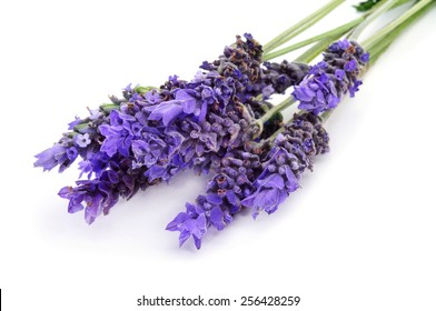 some lavender flowers on a white background