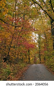 Some lovely fall colors over this narrow lane