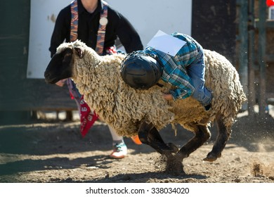 Some Mutton Busting at the Rodeo