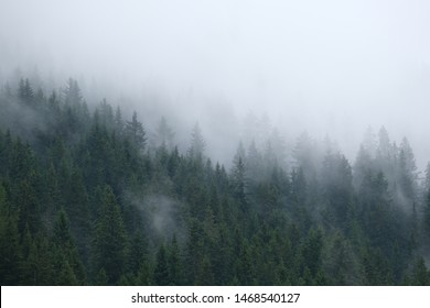 some mysterious photography of cloudy trees in the swiss alps