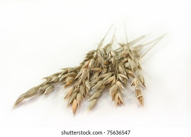 some oat panicles on a white background