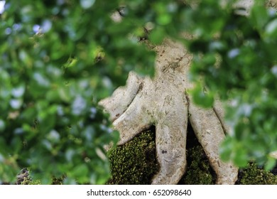 some part of bonsai tree background (soft focus)