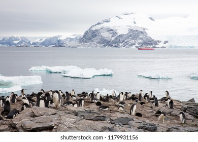 some penguins in the arctic walking around on the north pole and looking for the young baby's