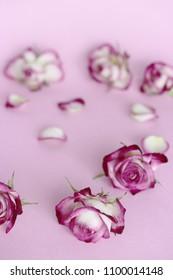 some rosebuds on pink paper
