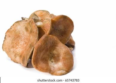 Some saffron milk caps isolated on a white background.