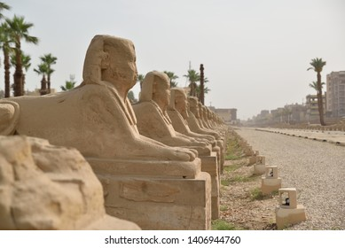 Some of the sphinx of the karnak avenue that link Karnak and Luxor Temples in Luxor, Egypt