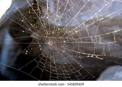 Some Spider Net Back Illuminated Over Some Rocks
