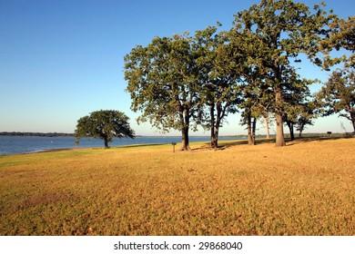 some trees near a beautiful lake