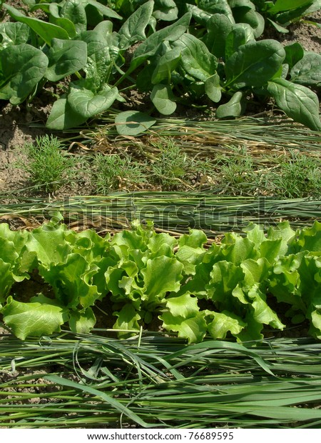 Some Types Greens Growing Together On Stock Photo (Edit Now