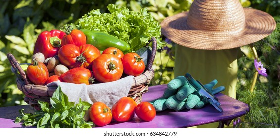Some vegetables in a basket under the sunlight