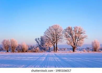 Einige sehr schöne Bäume stehen am Rande eines Feldes. Das Licht der Morgensonne fällt auf die Bäume. Es gibt Schnee und es ist sehr kalt. Im Altmark, Sachsen-Anhalt gesehen.
