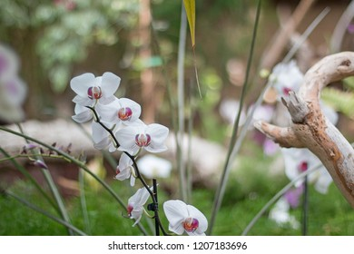 Some white orchids in a greenhouse.
