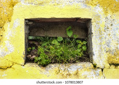 Some wild plants growing on yellow wall
