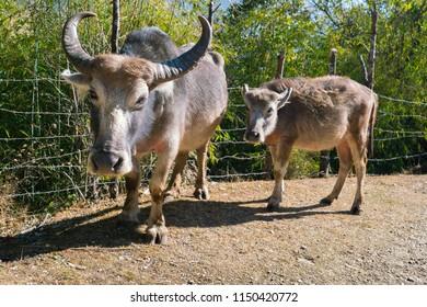 Some wildlife treking in nepal between way to abc circuits