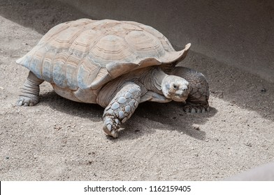 Some of the Zoos oldestand slowestresidents are the Galpagos tortoises. The Galapagos tortoise or Galapagos giant tortoise is a tortoise of the Testudinidae family, endemic to the homonymous archipela
