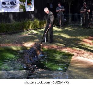Somersby, Australia - May 28, 2017. Feeding show of Australia's crankiest crocodile Elvis the resident saltwater crocodile at The Australian Reptile Park.