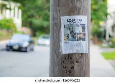 Somerville, USA - August 18 2018: 'Lost Cat' posting on a pole in Somerville.