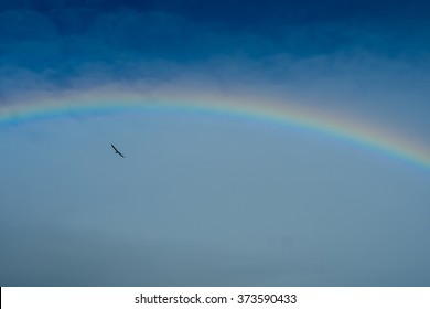 Somewhere Over The Rainbow Afbeeldingen Stockfotos En Vectoren