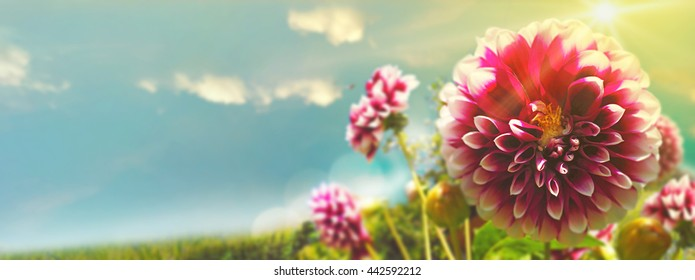 Sommer background with fresh flowers