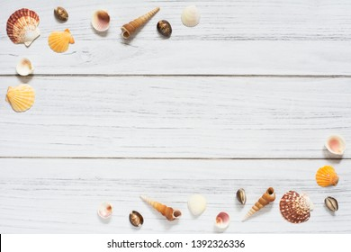 Sommer border with seashells on white wooden background