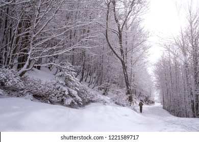 Somport, France. General view of a cross country female skiier moving the middle of a full of snow track with trees at each side.