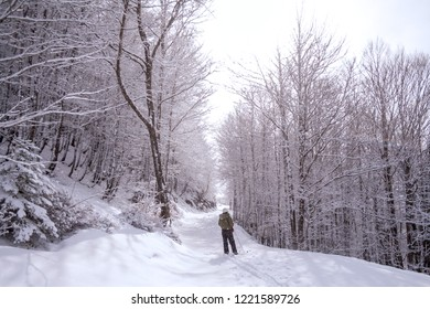 Somport, France. Horizontal view of cross country female skiier resting in the middle of a full of snow track with trees at each side.