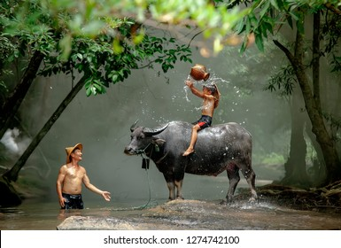 Son and dad this is lifestyle of family farmer at rural Asia. Traditional life of famer in countryside Thailand. The joy of children with buffalo in the river at the forest.