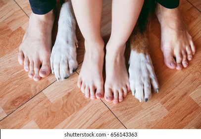 son, father and the family dog's feet, feet best friends and dogs foot, human and dog's legs, dog's paw feet next to the owner, friendship, boy, dad and dog barefoot
