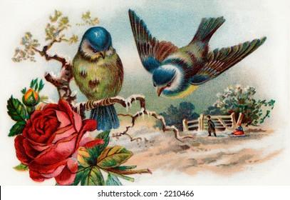 Song birds - winter scenic - circa 1910 vintage illustration