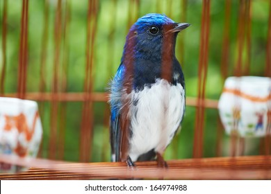 Songbird in cage. Symbol of prison