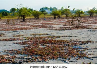 Songor Lagoon, Volta Region, Ghana.