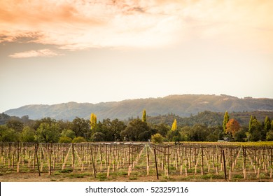 Sonoma County vineyard at sunset with golden sky