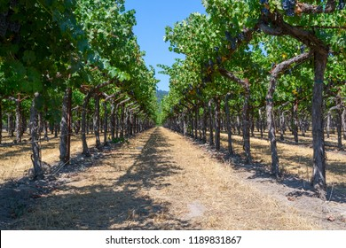 Sonoma valley is world renowned for its wineries