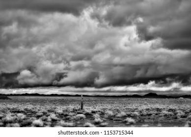 Sonora desert in Infrared central Arizona USA