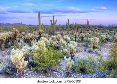 Sonoran Desert catching day's last rays.