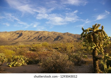 Sonoran desert landscape with cholla cactus in foreground