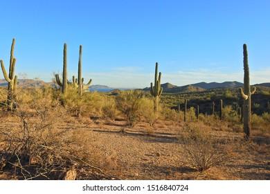Sonoran Desert, Maricopa County, Lake Pleasant, Arizona.