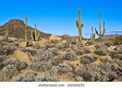 Sonoran desert scene in Arizona