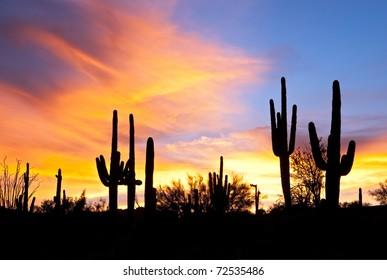 Sonoran Desert sunset.