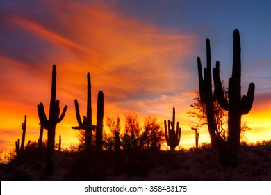 Sonoran Desert at sunset, in Arizona.