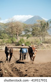 Sonsonate / El Salvador - January, 3rd 2011: A local farmer uses the traditional method of plowing the land with an ox cart.